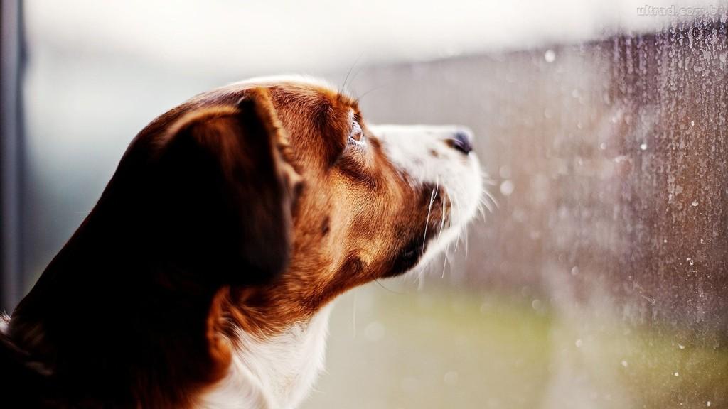 imgem-artigo-adocao-de-cachorro-jpg